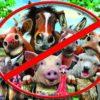 Верховный суд запретил разводить на садовых участках сельскохозяйственных животных
